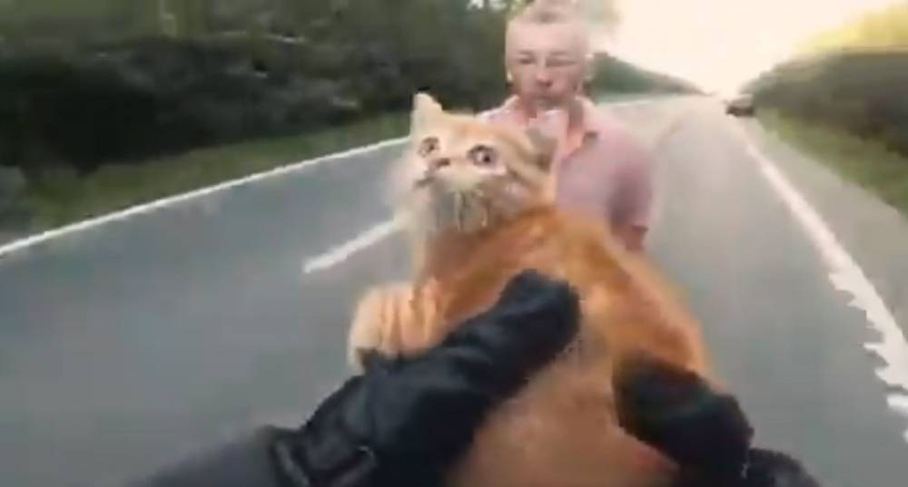 Vídeo motorista salva gatito