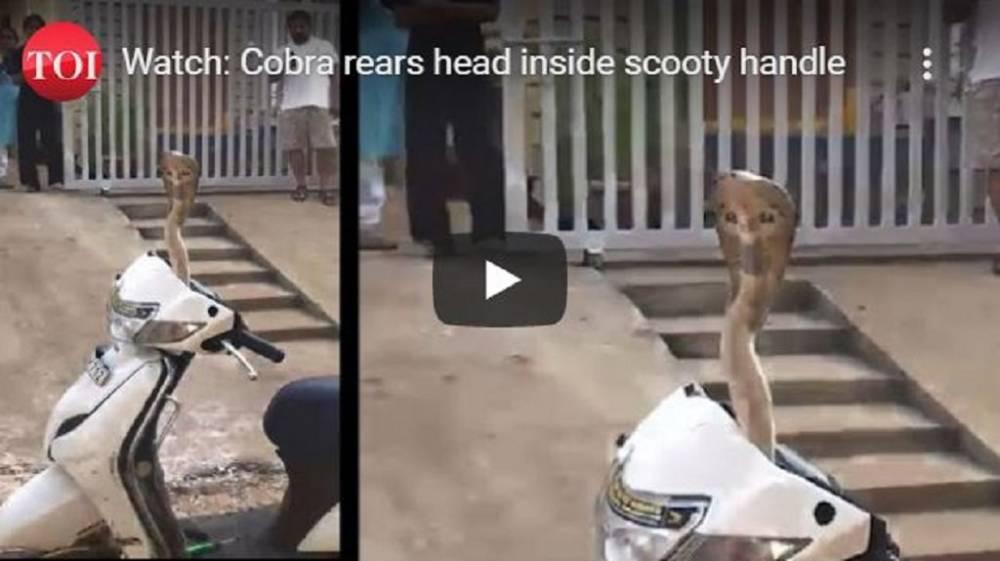 cobra escondida en moto